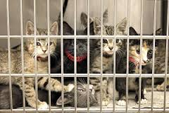 Pet expert Steve Dale endorses helping Chicago Animal Care & Control, and sign the petition