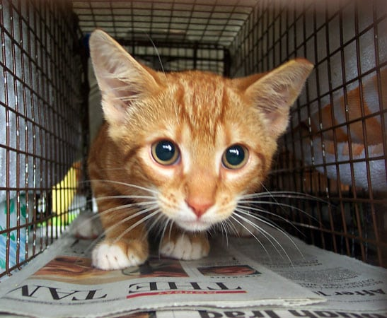 Kittens can be adopted