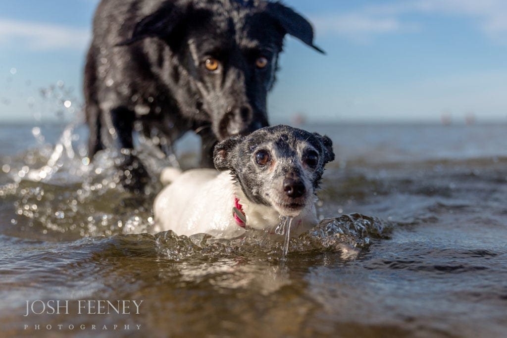 Vote for Montrose Dog Beach