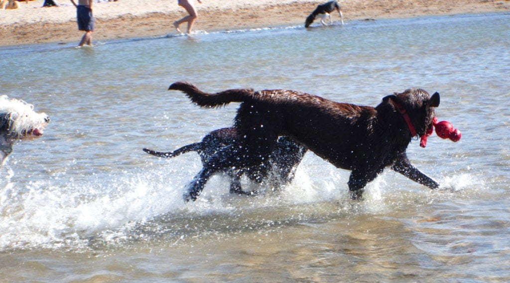 Steve Dale says Vote for Montrose Dog Beach