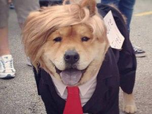 Donal Trump dog