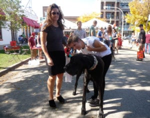 Pet expert writes about and will emcee Mutt Strut for Chicago Canine Rescue