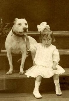 Dogs called pit bulls were once thought to be great family dogs - wasn't that long ago