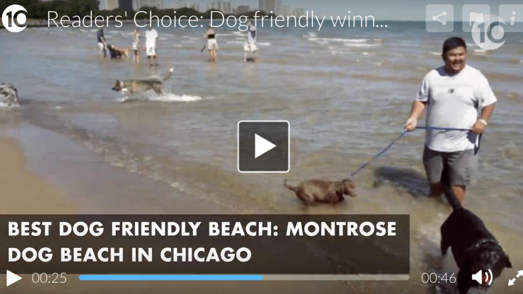 Montrose Dog Beach Vote the Best in America