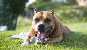 Pet expert Steve Dale stands against breed specific legislation