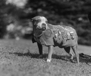 A pit bull type dog named Sgt. Stubby met three presidents, the most decorated dog ever