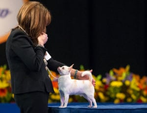 Pet expert Steve Dale reports on the National Dog Show presented by Purina with John O'Hurley and David Frei