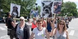 Pet expert Steve Dale on pit bulls and breed bans like Montreal