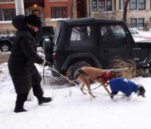 Pet expert Steve Dale talks cold weather safety on WGN radio including Safe Step Sure Paws