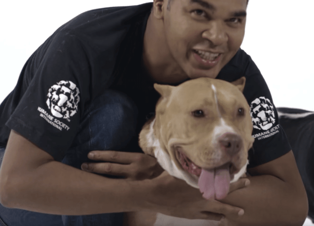 Dogfighting is banned in Mexico