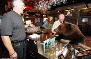 maybe it can happen - a bear in a bar