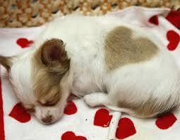 Pet expert Steve Dale on pet adoption event Chicago Animal Care & Control