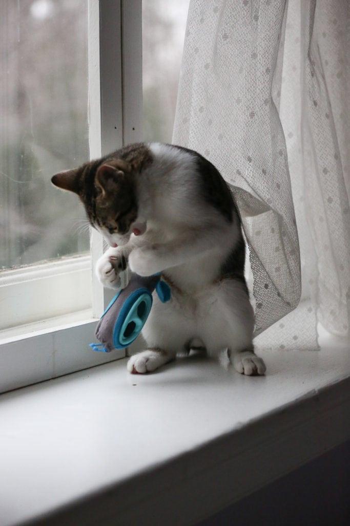 Pet expert Steve Dale writes about Elizabeth Bales NoBowl cat feeding system