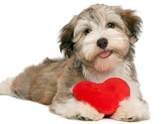 Do our pets love us? From the American Animal Hospital Association