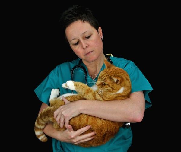 Cat expert Steve Dale offers FIP updates