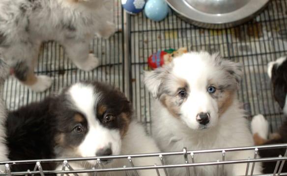 Vancouver seeking limit of pet store sales