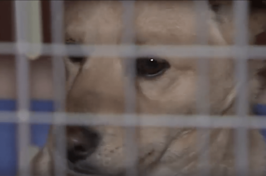 Dogs from South Korea arriving for Magnificent Mutts