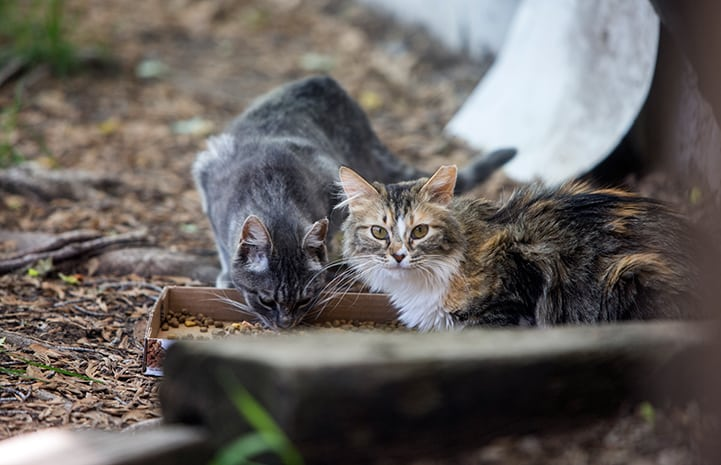 Supporting humane solutions for community cats