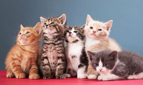 Kittens should be 'fixed' by five motnhs