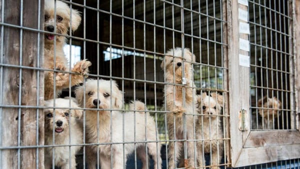 Veterinary association and AKC supporting puppy mills?