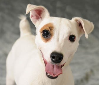 Dogs Food Recall Phenobarbital