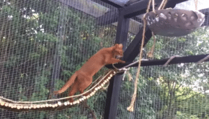 Catios are enrichment for cats who enjoy exploration - and this keeps them safe