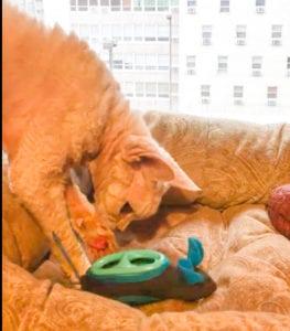 Roxy uses NoBowl Feeding System