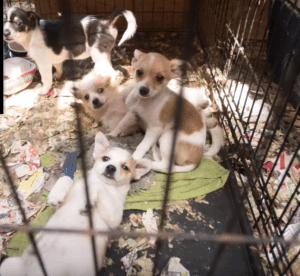 Pet expert Steve Dale comments on states efforts to fight puppy mill bills and pet store sales laws