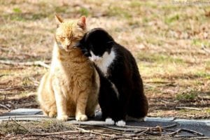 Pet expert Steve Dale responds to a National Geographic story on TNR
