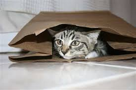 Cat expert Steve Dale on environmental enrichment for cats and NoBowl Feeding System