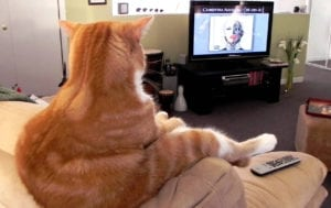 Cat expert Steve Dale writes about enrichment for overweight cat