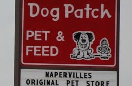 Pet expert Steve Dale say support Dog Patch Pet and Feed