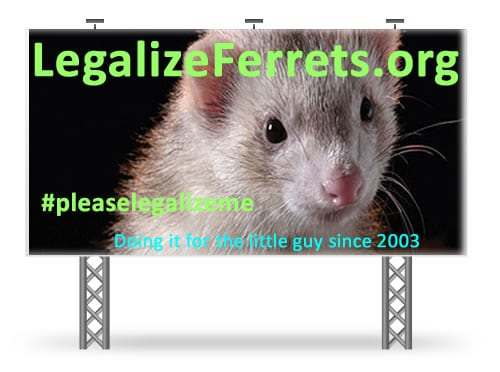 Pet expert Steve Dale on National Ferret Day and the ferret law in California