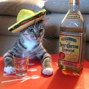 Pet expert Steve Dale writes about upcoming Cinco de Meow benefit for Felines and Canines