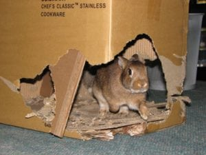 Rabbits NEED to chew