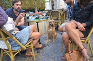 Dog hanging out at a restaurant in Montpellier, France