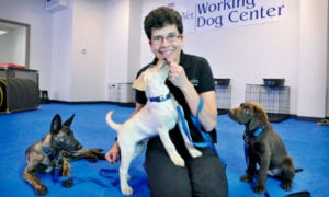 Dr. Cindy Otto, teaching cancer sniffing dogs