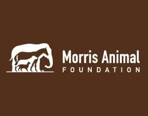 Pet expert Steve Dale speaks with Dr. John Reddington of the Morris Animal Foundation