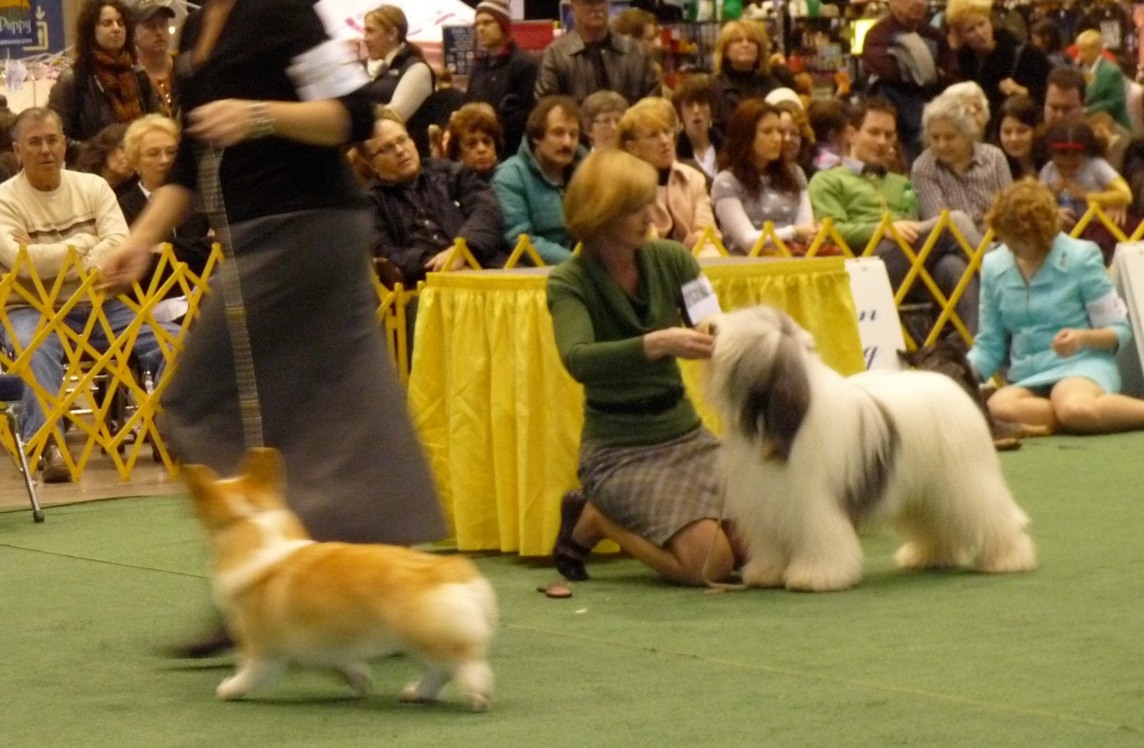 Akc Dog Shows In Florida