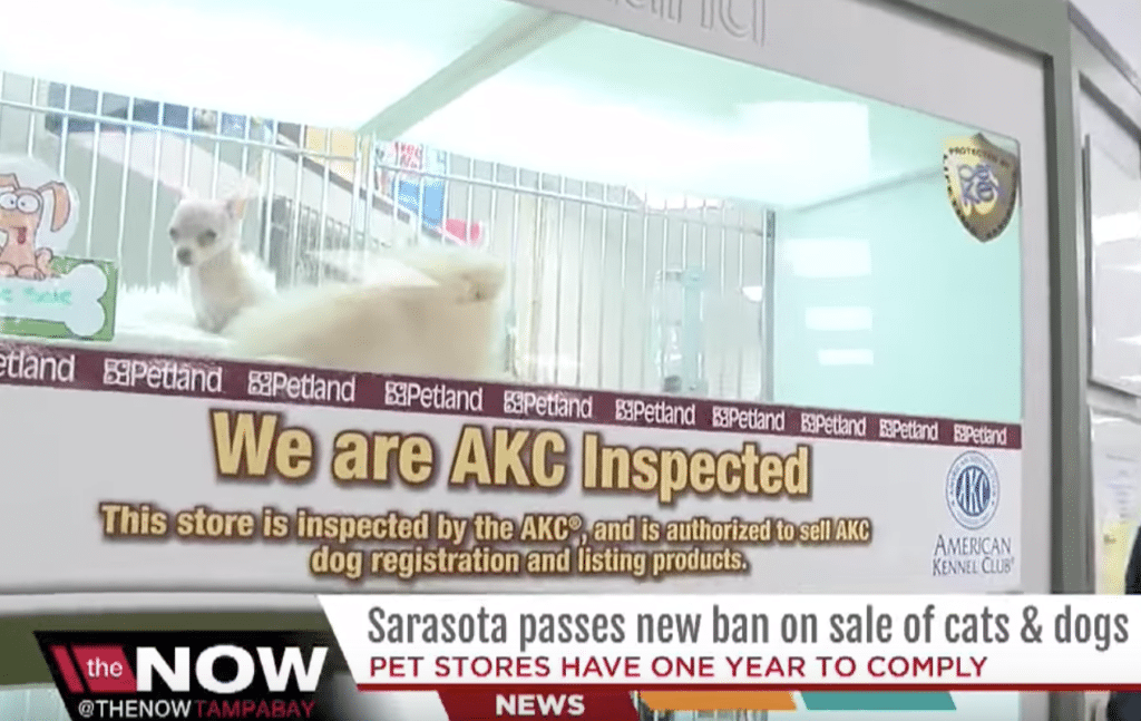 AKC opposes limits on pet store sales