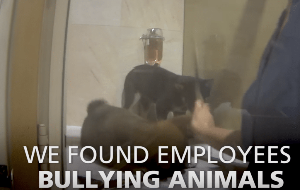 Why no dogs and cats should be sold at pet stores