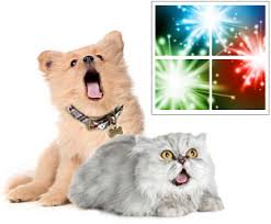 What to do last minute regarding pets' fears of fireworks