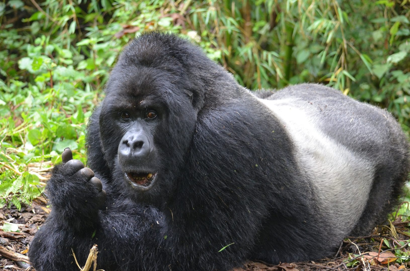 Is It Safe To Travel To Rwanda