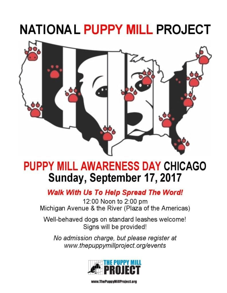 Puppy Mill March on Michigan Avenue, with pups, of course