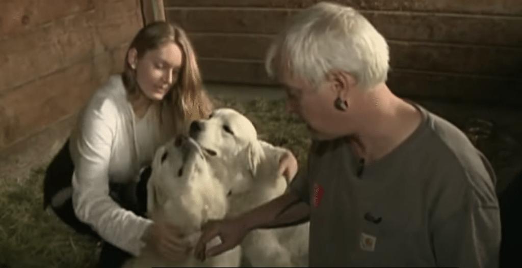 Life-saving dog