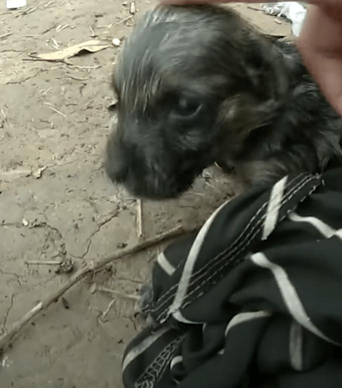 Good samaritan saves a puppy