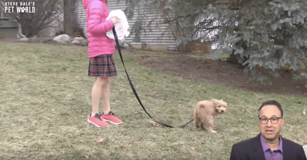 Go puppy go....House Training 101