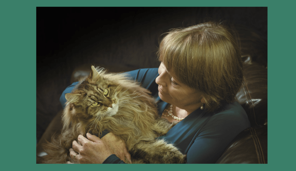 Update on using a holter device for cats with heart disease