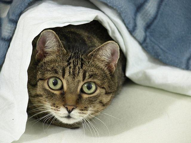 Steve Dale wonders, should cats be kept inside or outside