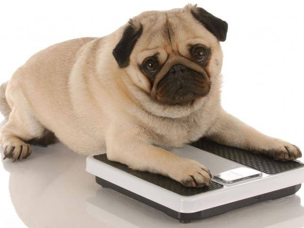 Less of this - fewer overweight pets